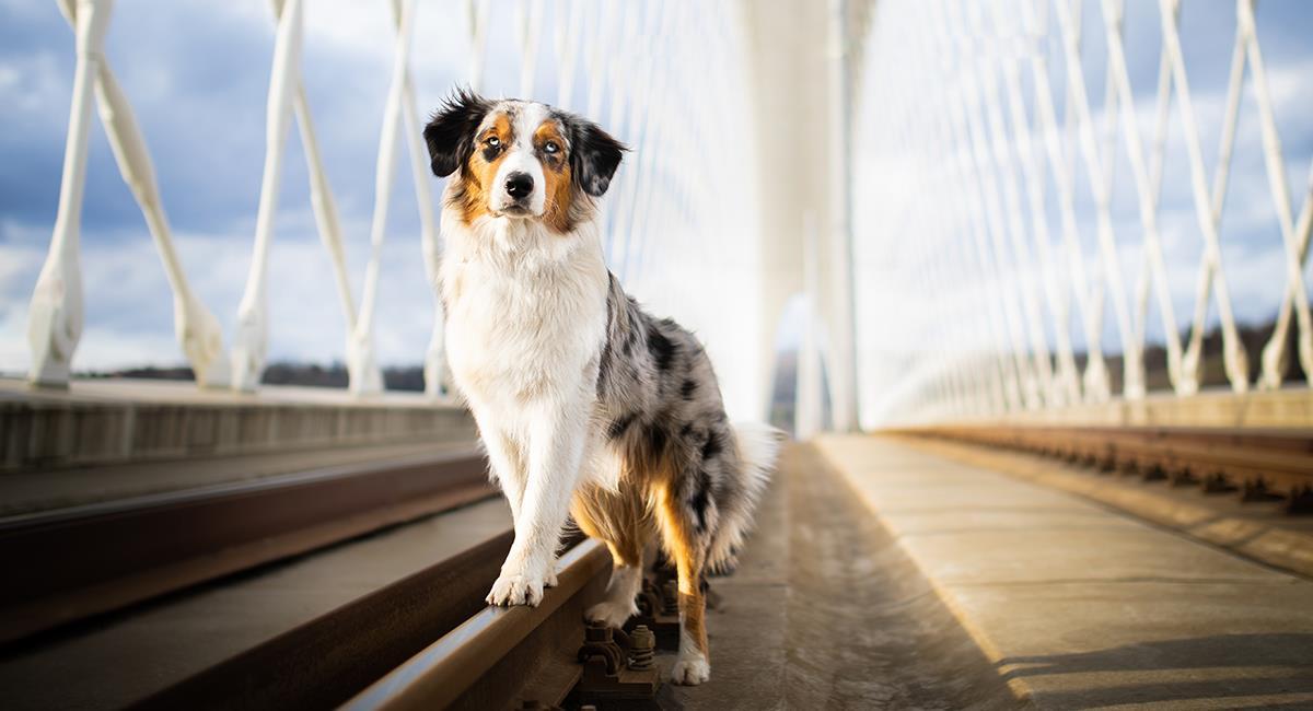 Héroe de cuatro patas: perro salvó la vida de una mujer que pensaba suicidarse. Foto: Shutterstock