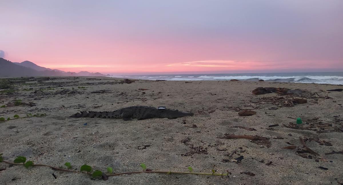 La playas estarán habilitadas en el horario establecido por Parques Naturales. Foto: Twitter @Martintapias
