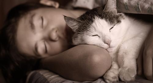 5 trucos para hacer que tu gato duerma en las noches