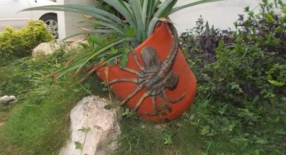 Los internautas se 'aterraron' cuando vieron el supuesto insecto. Foto: Twitter @CoffeeMoon92