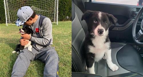 Perro del ciclista 'Superman' López fue víctima de maltrato animal