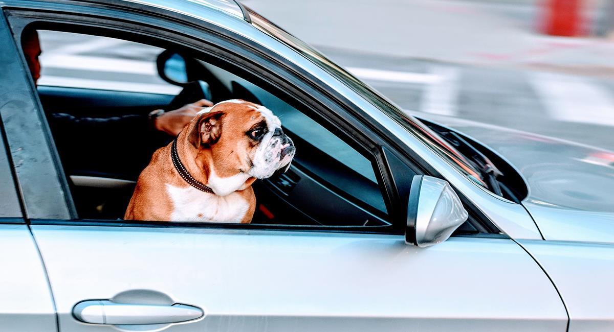 Los viajeros cada vez más disfrutan viajar acompañados de sus mascotas. Foto: Pixabay
