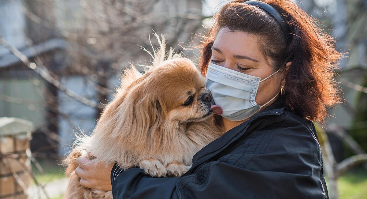 Enfermedades que pueden contagiar las mascotas a sus dueños. Foto: Shutterstock
