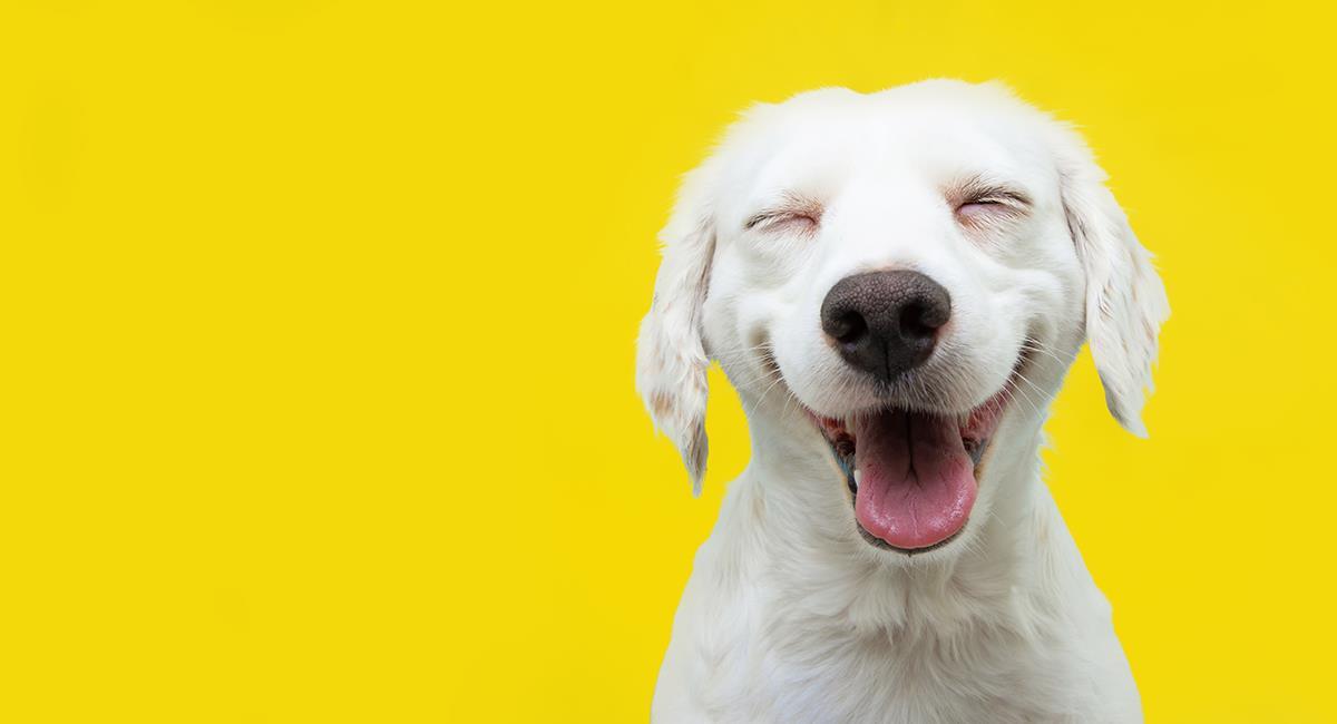 7 increíbles datos curiosos sobre los perros que probablemente no conocías. Foto: Shutterstock