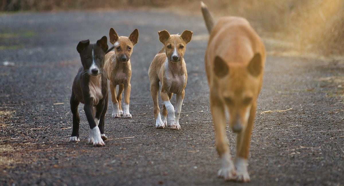 Perros callejeros: te enseñamos qué debes para ganarte su confianza. Foto: Shutterstock