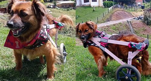 La historia de Lindi, la perrita de la silla de ruedas artesanal