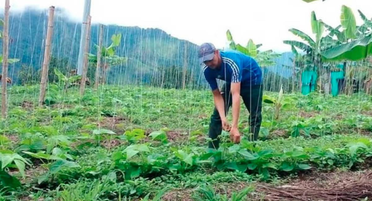 SENA busca apoyar el emprendimiento rural con 9 mil millones de pesos. Foto: Twitter @SENAComunica