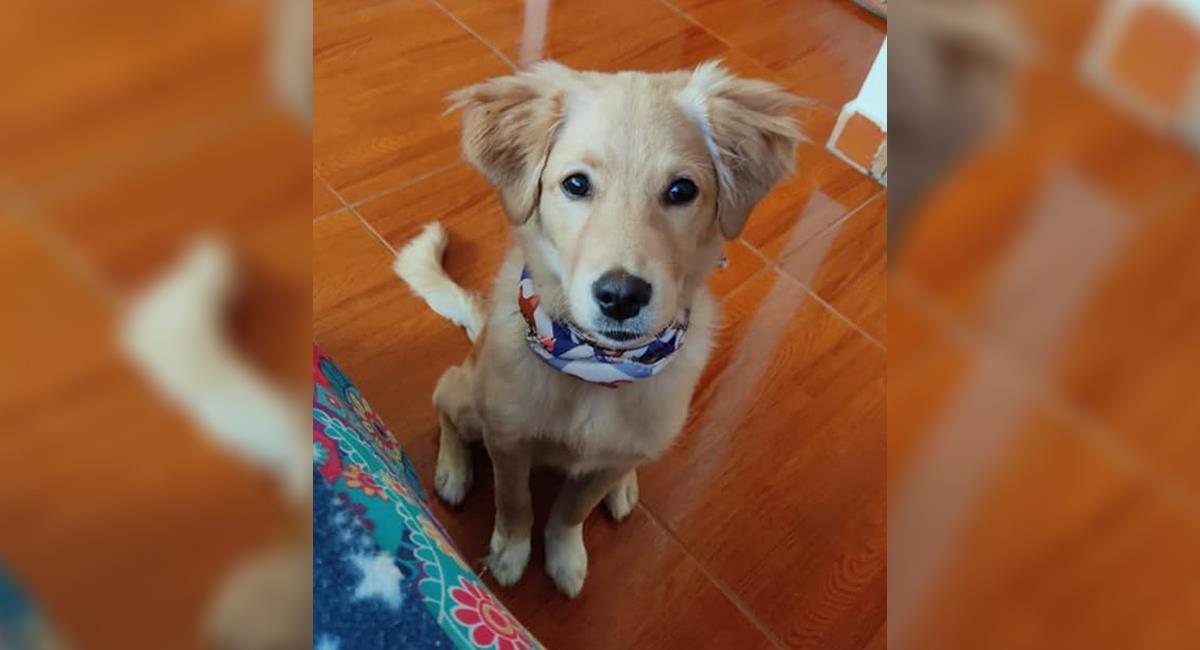 Guardería de terror en Chía: 2 perros murieron y otros 15 eran cruelmente maltratados. Foto: Facebook Tatis Pinto