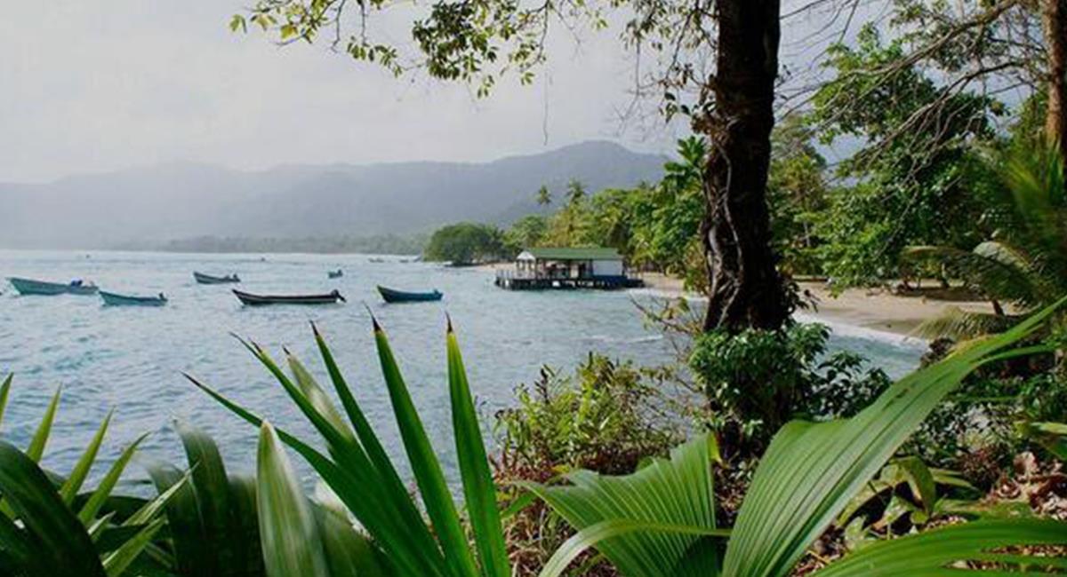 Los espacios naturales de Capurganá son considerados un Santuario Natural para las tortugas. Foto: Twitter @Kaliche_Varela