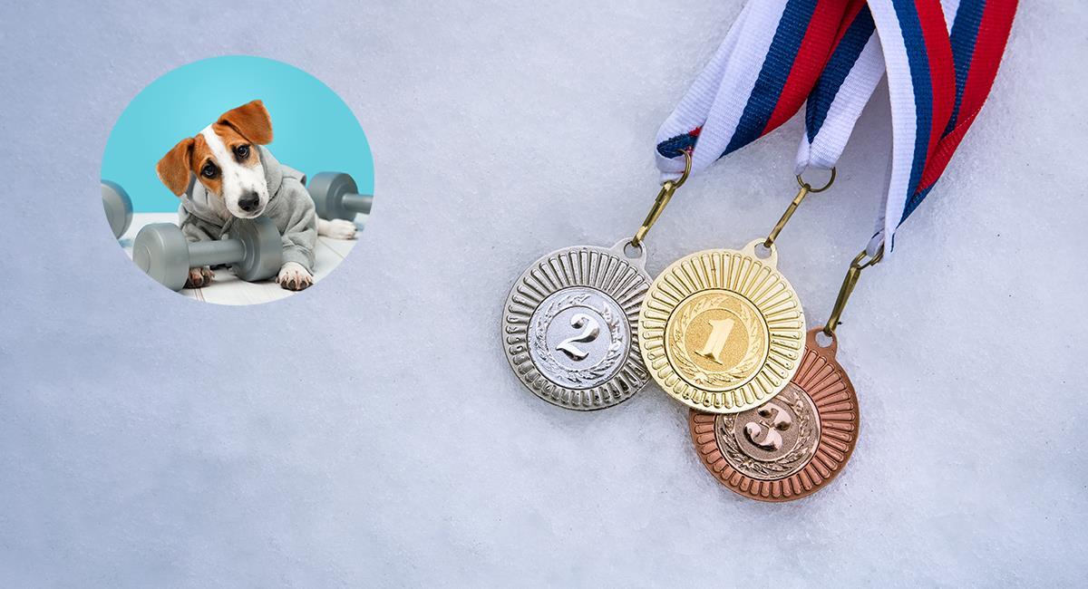 Así serían los Juegos Olímpicos si los deportistas fueran animales. Foto: Shutterstock