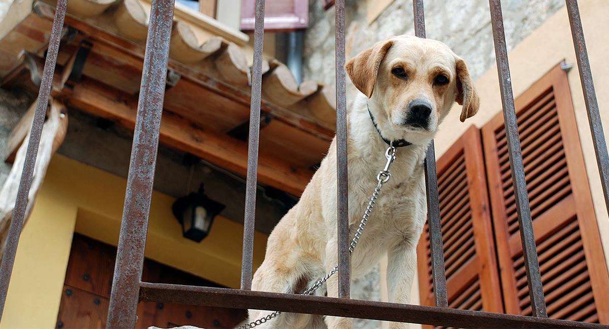 Maltrato animal: perro encerrado en un balcón recibe correazos por hacer sus necesidades. Foto: Shutterstock