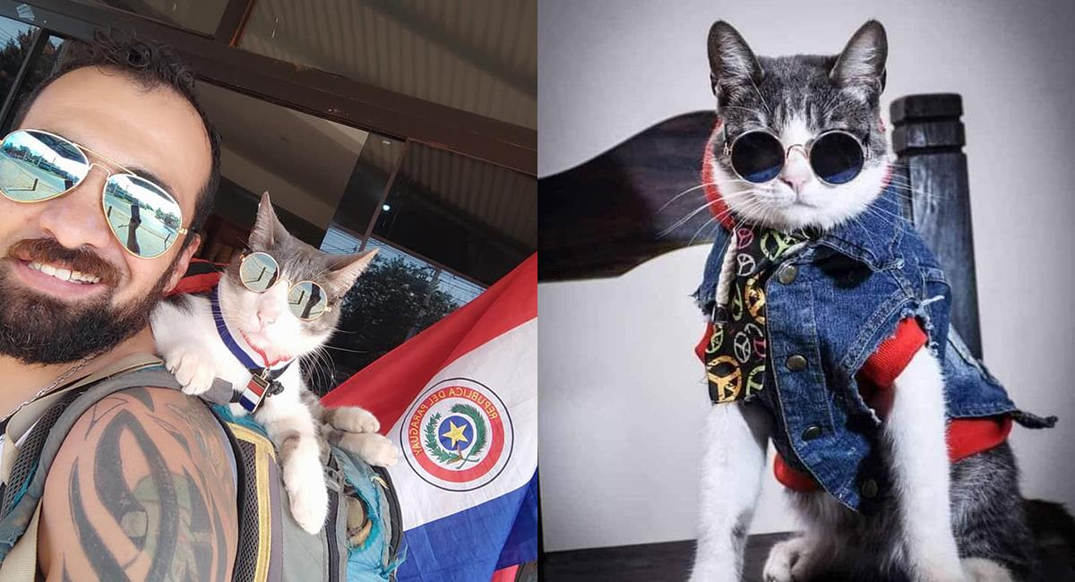Envenenamiento o ataque de perros: confusión por la muerte del 'gato mochilero'. Foto: Facebook El gato mochilero 1