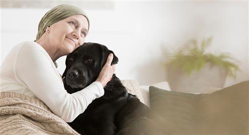 Pasan de ser abandonados y rechazados a perros de terapia
