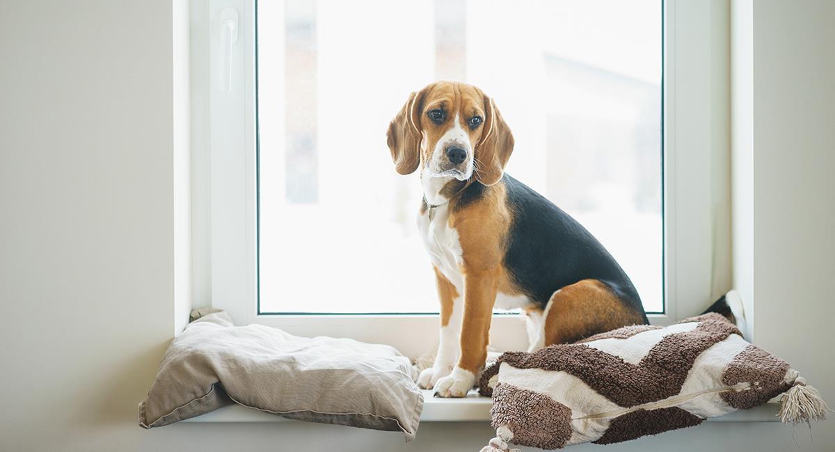 4 tips de preparación de tu perro para dejarlo nuevamente solo en casa. Foto: Shutterstock