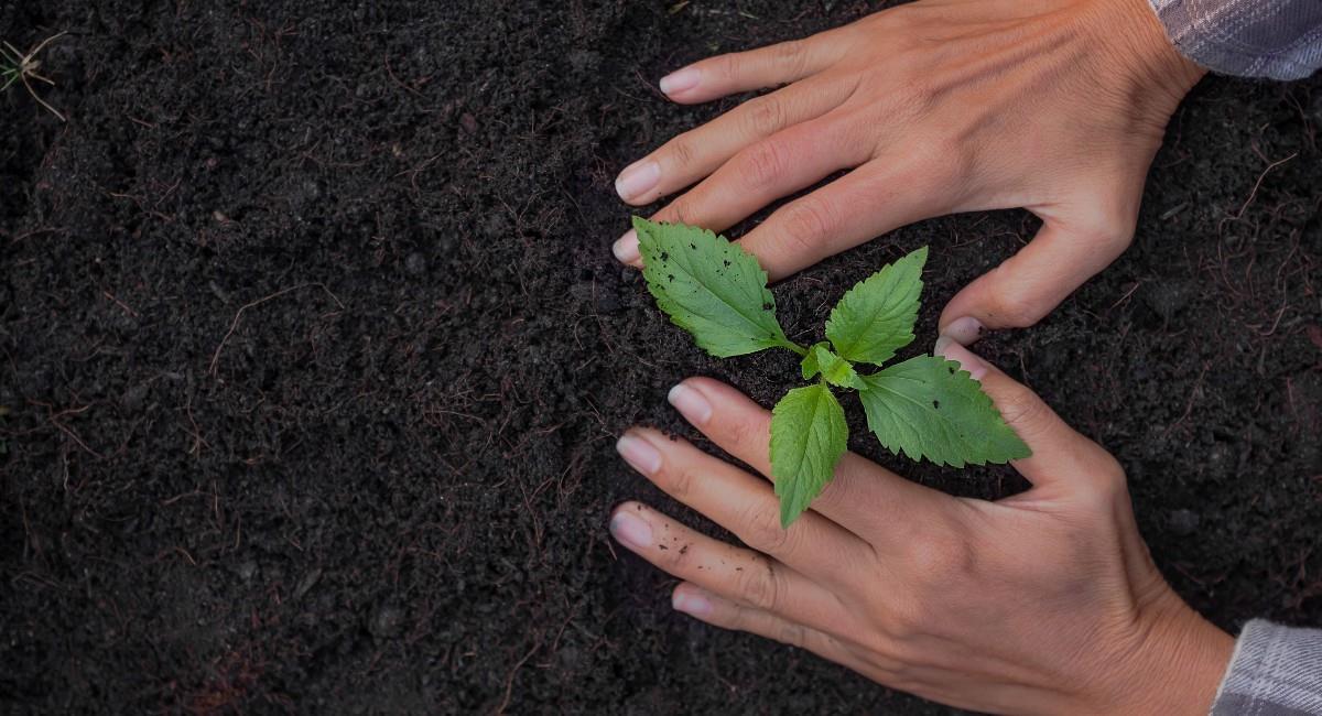 65 defensores del medio ambiente perdieron su vida durante el 2020. Foto: Shutterstock