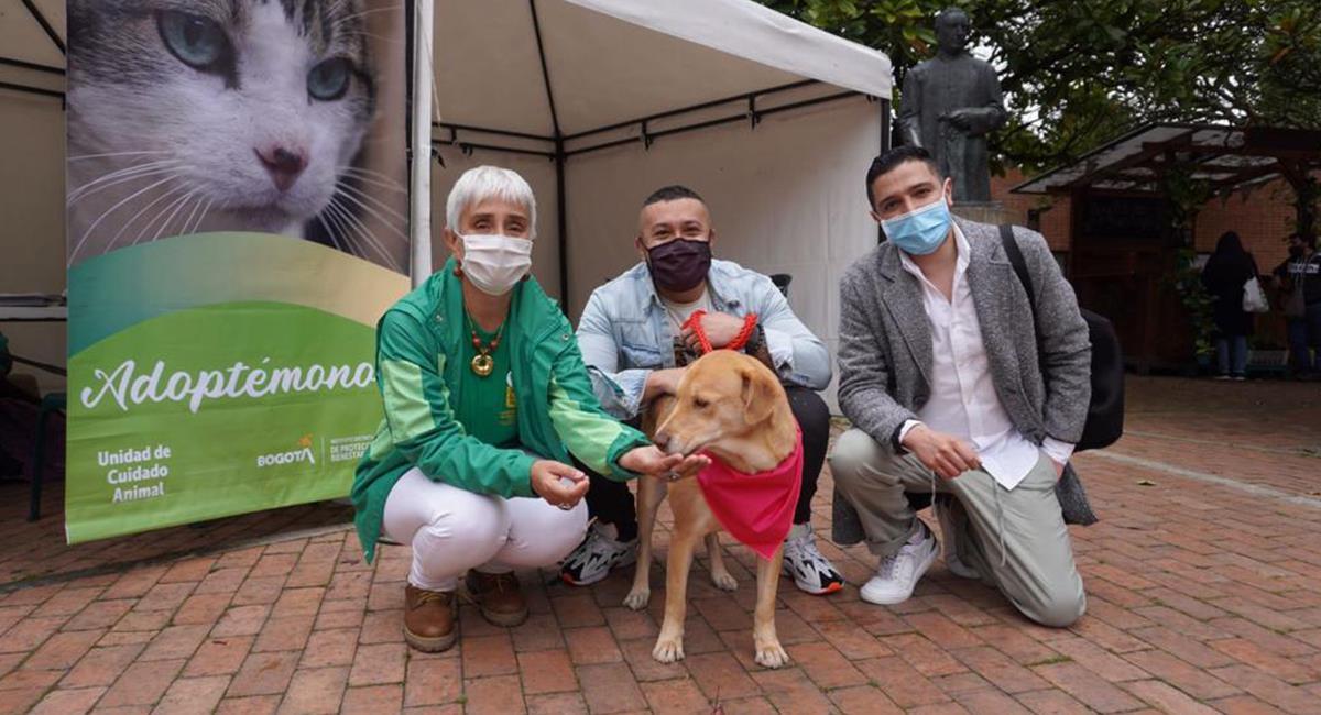 Adopta una mascota en Amor y Amistad: 100 animales buscan un nuevo hogar. Foto: Cortesía IDPYBA