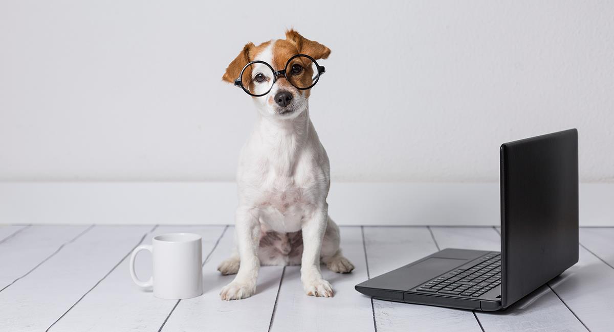 Los perros más inteligentes pertenecen a estas 7 razas. Foto: Shutterstock