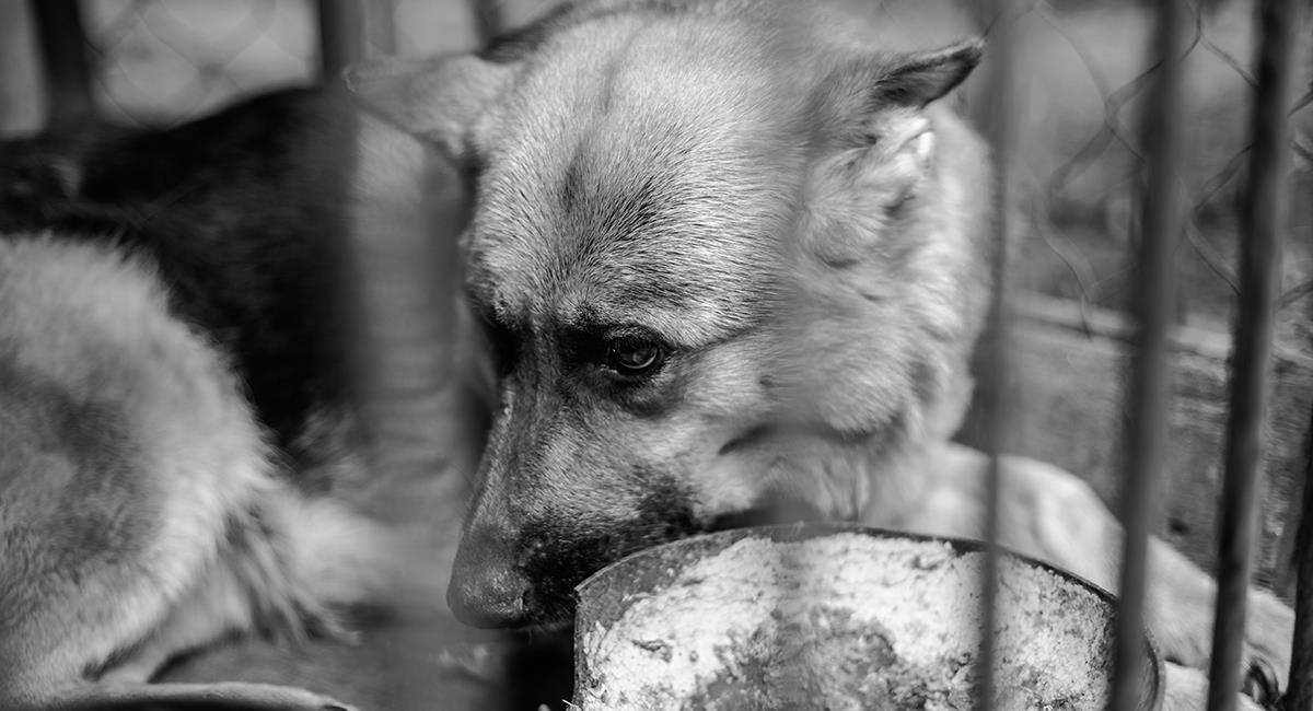 Perros abandonados en Afganistán: esto será lo que pasará con ellos. Foto: Shutterstock
