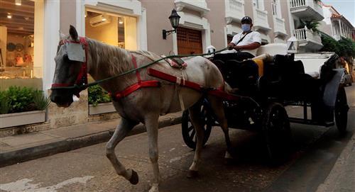 Célebre coches de caballos de Cartagena: ¿oficio o maltrato animal?