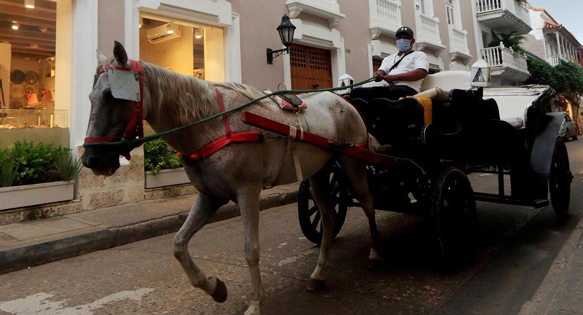 Ahora se desconoce si los animales serían retirados de su tradicional oficio en la Ciudad Amurallada. Foto: EFE