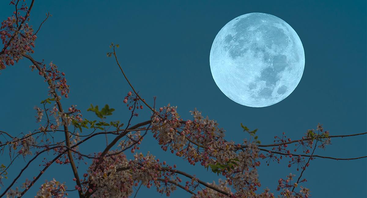 Experta revela un poderoso ritual de Luna llena para atraer lo que deseas. Foto: Shutterstock
