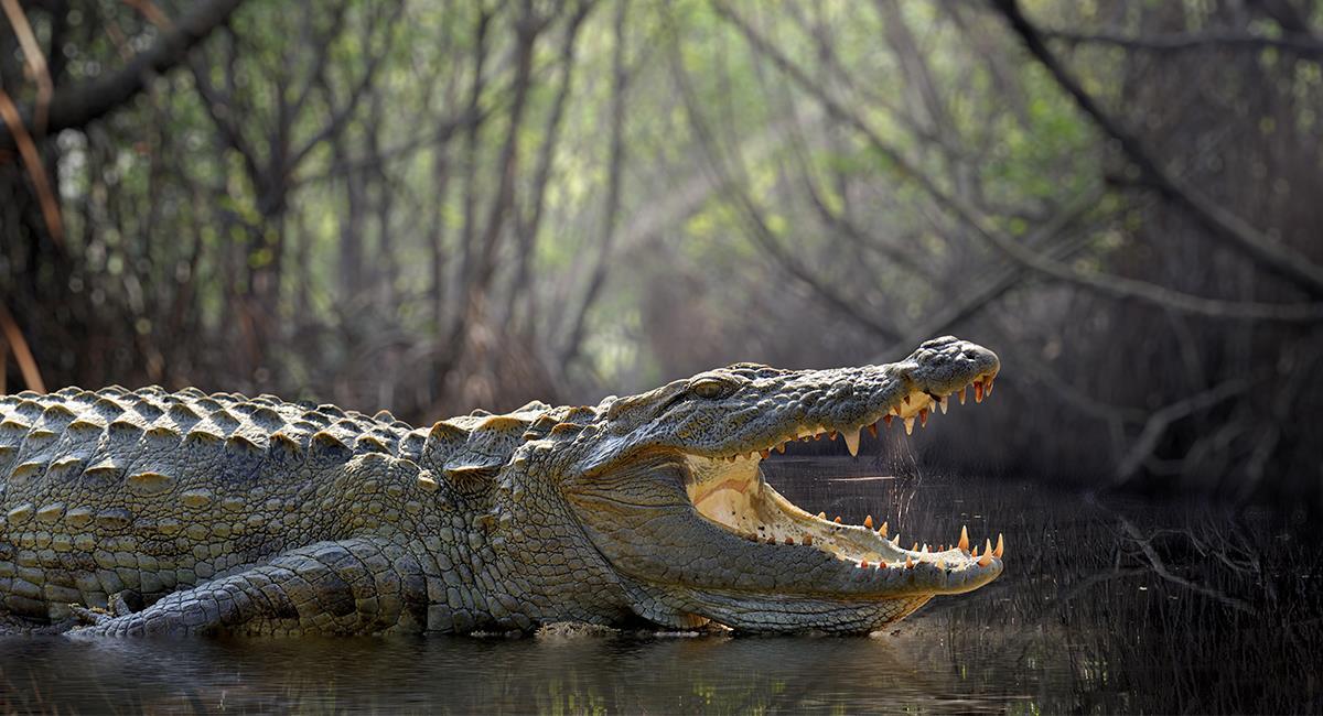 Así se enfrentó una mujer de 74 años a un cocodrilo para salvar a su perro. Foto: Shutterstock