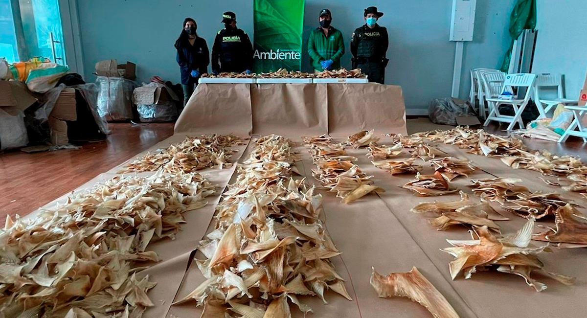 Casi 3.500 aletas de tiburón iban a ser enviadas a China. Foto: EFE