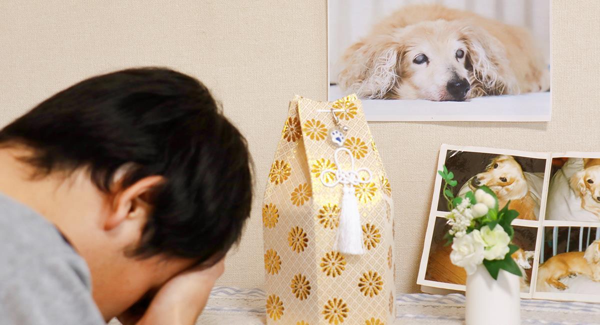 Para afrontar el duelo, piden otorgar licencia remunerada por la muerte de una mascota. Foto: Shutterstock