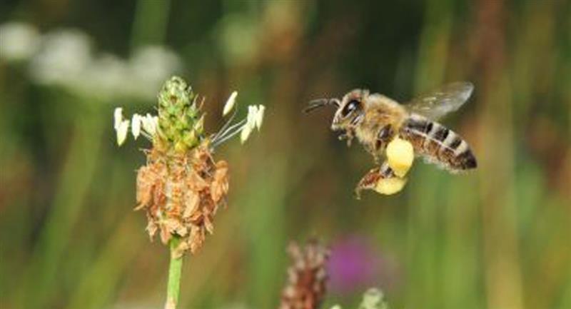 Universidad colombiana crea superalimento que protege a las abejas de los pesticidas