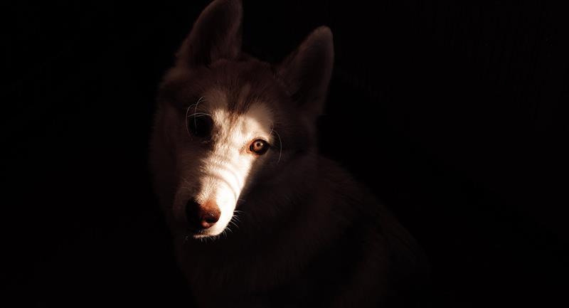 """El Perro de San Francisco, el espectro animal que anunciaba la """"muerte"""" en Tunja"""